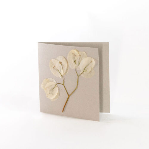 Natural Grey Card with pressed white bougainvillea