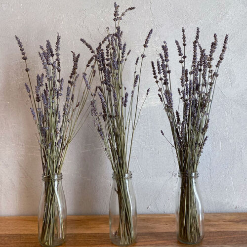 Trio of dried lavender in glass bottles