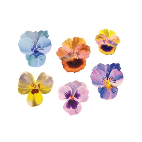Pansies by Helen Dealtry from Tattly Temporary Tattoos